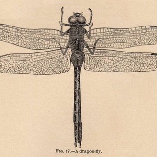 Vintage Clip Art – Dragonfly