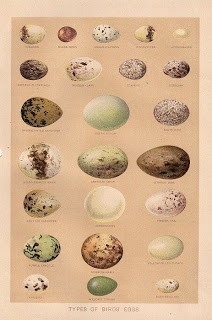 Free Graphic: Beautiful Bird Eggs
