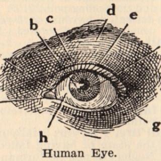 Vintage Clip Art – Eye Diagram