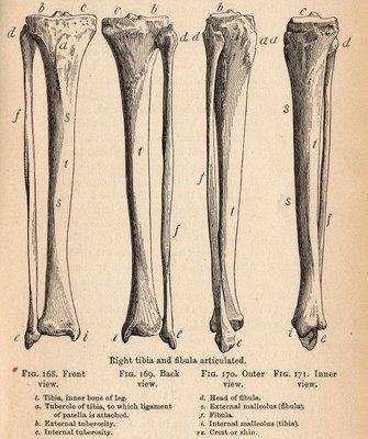 Vintage Halloween Clip Art – Spooky Bones