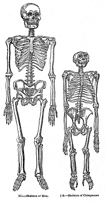 Vintage Halloween Clip Art – Skeletons