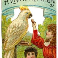 Charming Image Series - A Visit to the Aviary - Graphics Fairy