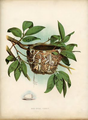 Vintage Printable - Lovely Bird Nest with Egg - Natural History