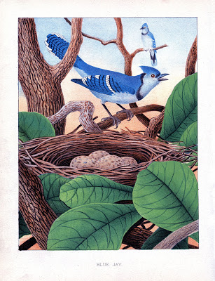 Instant Art Printable – Blue Jays with Nest