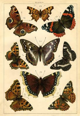 Instant Art Printable – Antique Butterflies and Moths