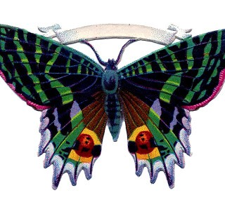 Antique Butterfly Image with Banner
