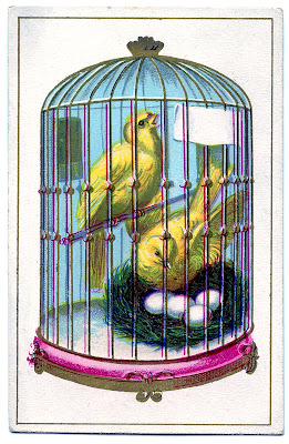 Vintage Image – Cute Canaries in Cage with Nest