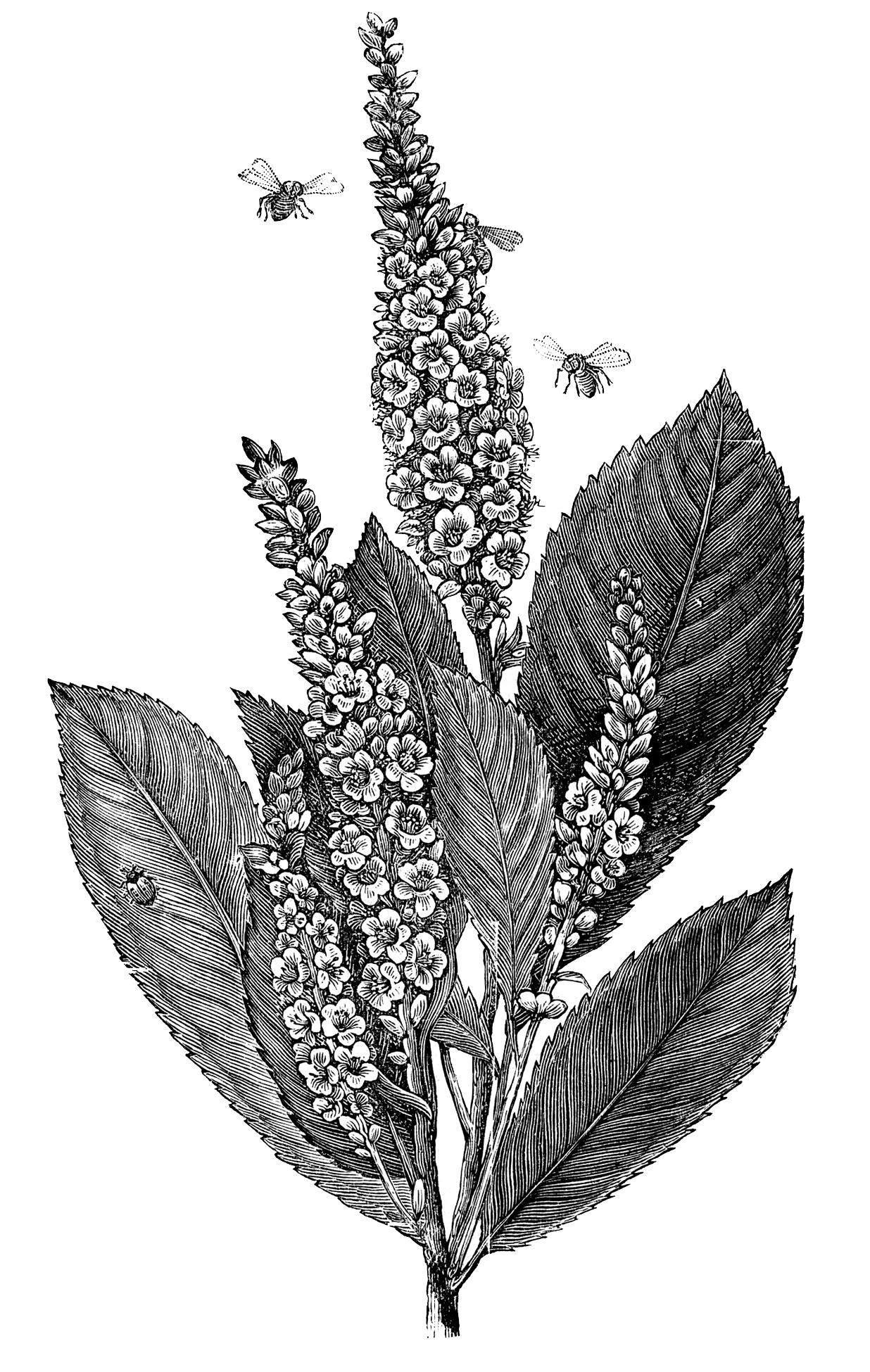 Vintage Garden Image Flowers Bees Ladybug The