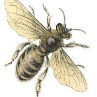 Vintage Stock Image - Honey Bee - Graphics Fairy