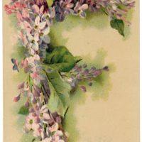 Victorian Graphic - Lilac Monogram - Letter F