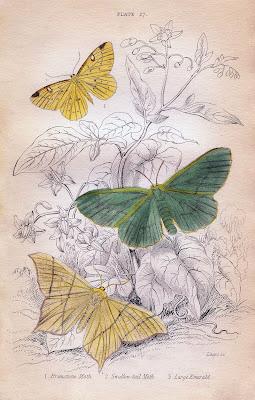 Instant Art Printable – Pastel Moths – Natural History