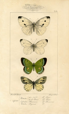 Natural History Printable Image – Moths – Butterflies