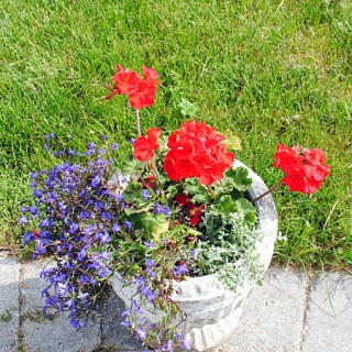 Plant a Garden Flower Pot – My Favorite Combo