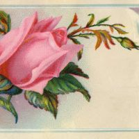 Victorian Graphic - Rose Calling Card