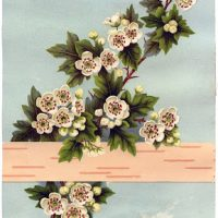 Vintage Stock Image - White Roses with Birch Bark 2