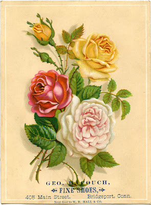 Vintage Stock Images - Old Roses - Pink Red Yellow