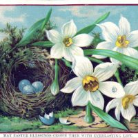 Royalty Free Easter Image - Nest with Eggs - Daffodils