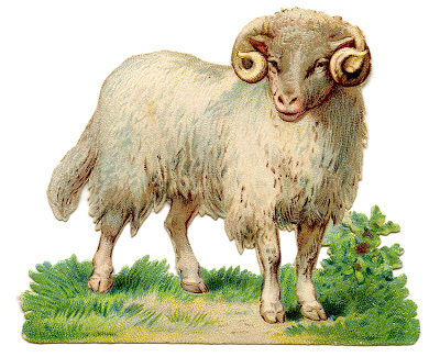 Vintage Sheep Image - Curly Horns - Graphics Fairy