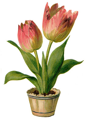 Vintage Clip Art - Pretty Pink Tulips - The Graphics Fairy