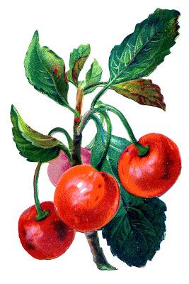 Vintage Fruit Graphic – Cherries