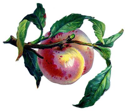 Vintage Fruit Image – Pretty Peach