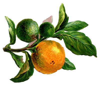 Vintage Image – Branch with Oranges