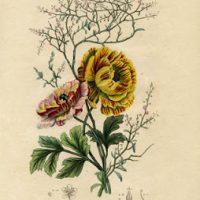 Vintage Printable - Botanical Floral - Instant Art