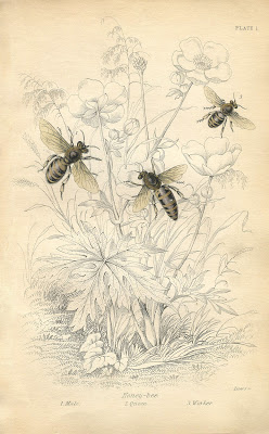 Vintage Printable – Honey Bees – Instant Art