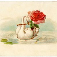 Vintage Image - French Swan with Rose