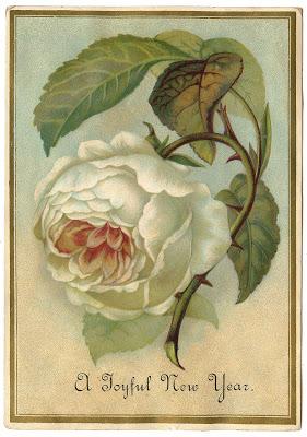 Antique Image – White Cabbage Rose