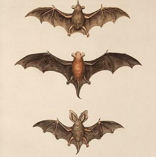 Free Halloween Clip Art – Flying Bats