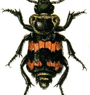 Free Halloween Clip Art – Orange and Black Bugs