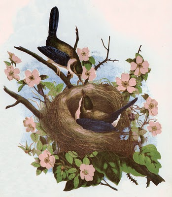 Free Vintage Clip Art 2 Pretty Birds With Nest The