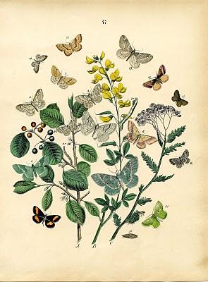 Instant Art Printable Download – Bohemian Butterflies