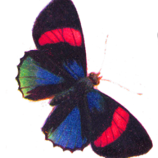 Free Clip Art – Gorgeous Butterfly