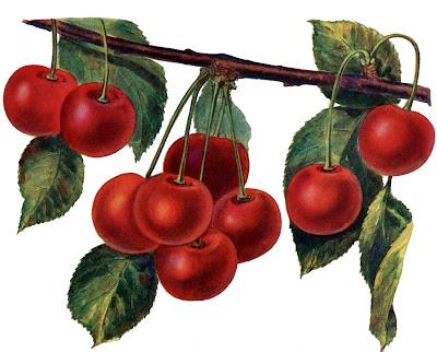 Instant Art Printable – Gorgeous Cherries