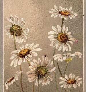 Victorian Clip Art – Daisies