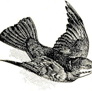 Free Vintage Clip Art – Dictionary Bird Images