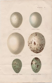 Old Fashioned Eggs