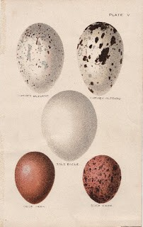 Brown & White Speckled Eggs