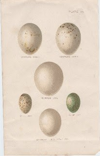 Beautiful Bird's Eggs