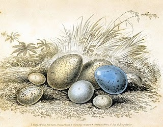 Vintage Clip Art – Antique Egg Print – Blue