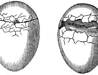 Antique Natural History Graphics – Cracked Eggs