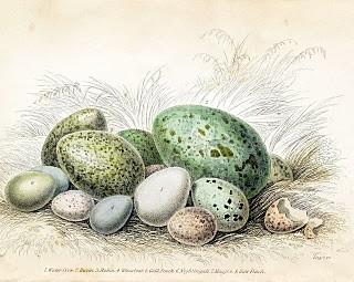 Free Vintage Clip Art – Gorgeous Bird's Eggs