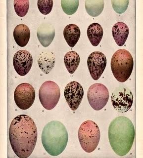 Free Vintage Clip Art – Birds Eggs