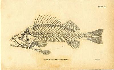 Instant Art Printable Download – Fish Skeleton