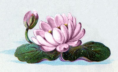 Vintage Clip Art Water Lily The Graphics Fairy