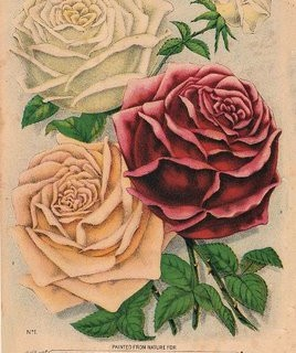 Old Seed Catalog – Roses