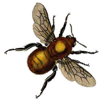 Vintage Clip Art – Beautiful Golden Bee
