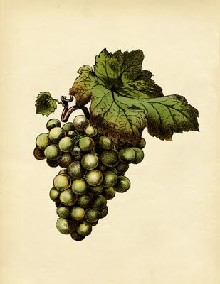 Green Grapes Cluster